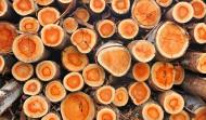 Apvalios medienos prekyba